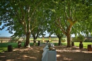 parc chateau vin honneur provence vigne platanes